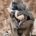 Fotoreise mit Benny Rebel nach Tansania im Oktober 2015