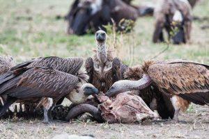 Pavian-Fotoreise-Afrika-Fotosafari-Tansania-Gugolz-2