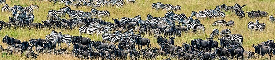 Fotoreise-Foto-Safari-Fotoworkshop-Afrika-Benny-Rebel-Kenia-A104