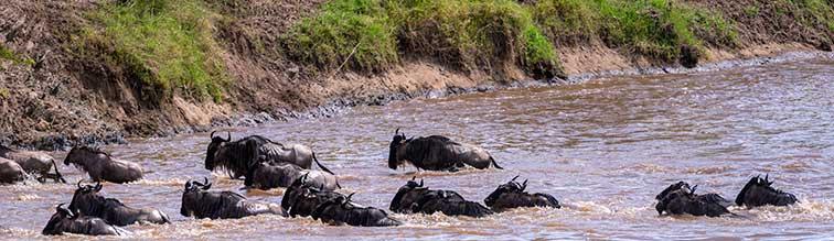 Fotoreise_Kenia_Fotosafari_Fotoworkshop_Afrika_Masai_Mara_002