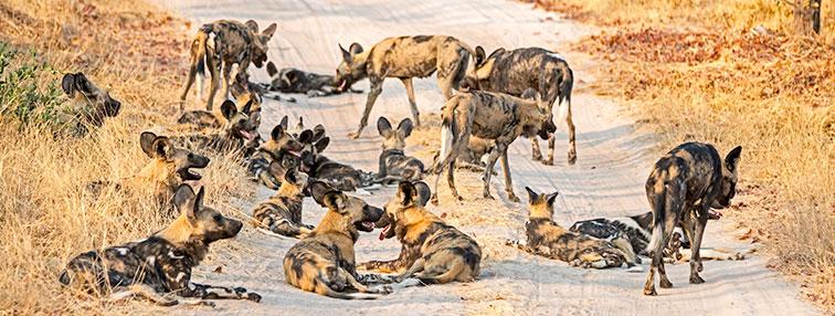 Fotoreise-Fotosafari-Botswana-Simbabwe-Afrika-006