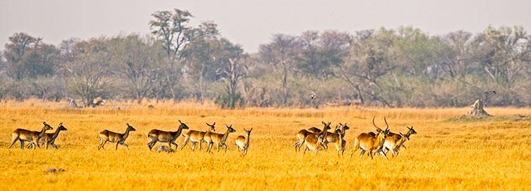 Fotoreise-Fotosafari-Botswana-Simbabwe-Afrika-007