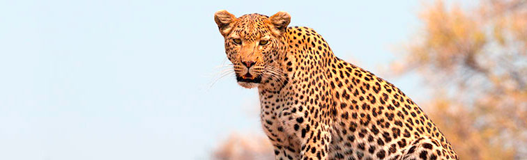 Fotoreise-Fotosafari-Botswana-Simbabwe-Afrika-008