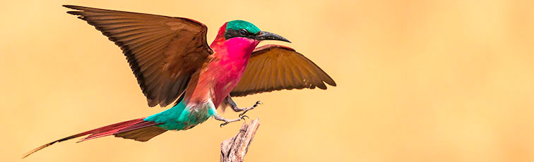 Fotoreise-Fotosafari-Botswana-Simbabwe-Afrika-019