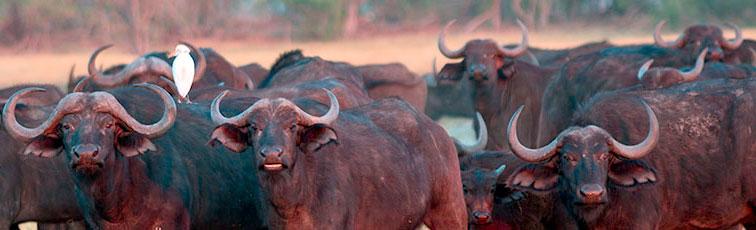Fotoreise-Fotosafari-Botswana-Simbabwe-Afrika-020