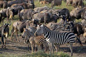 Fotosafari Tansania