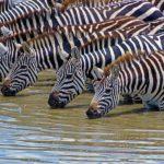 Tips und Anleitung vom erfahrenen Naturfotografen: Fotosafari