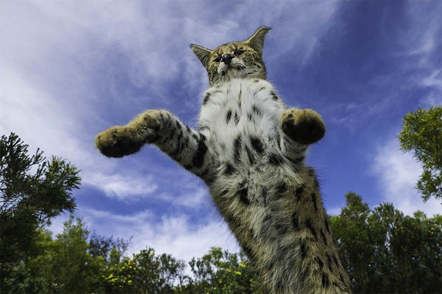 (Serval fotografiert mit 16mm)