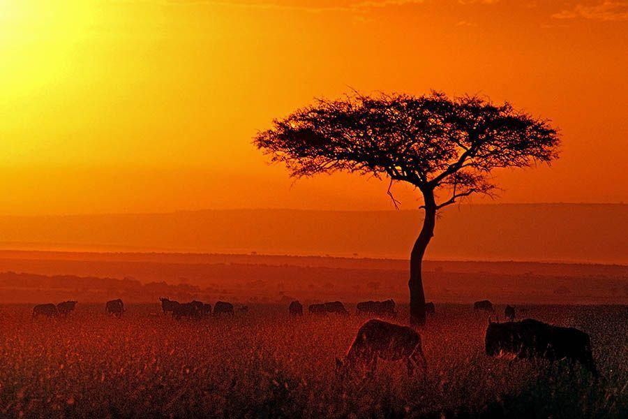 ASBenny-Rebel-Fotoreise-Kenia