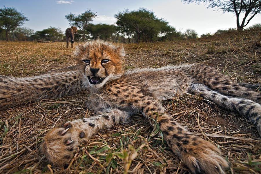 BIABenny-Rebel-Fotoreise-Suedafrika-Gepard