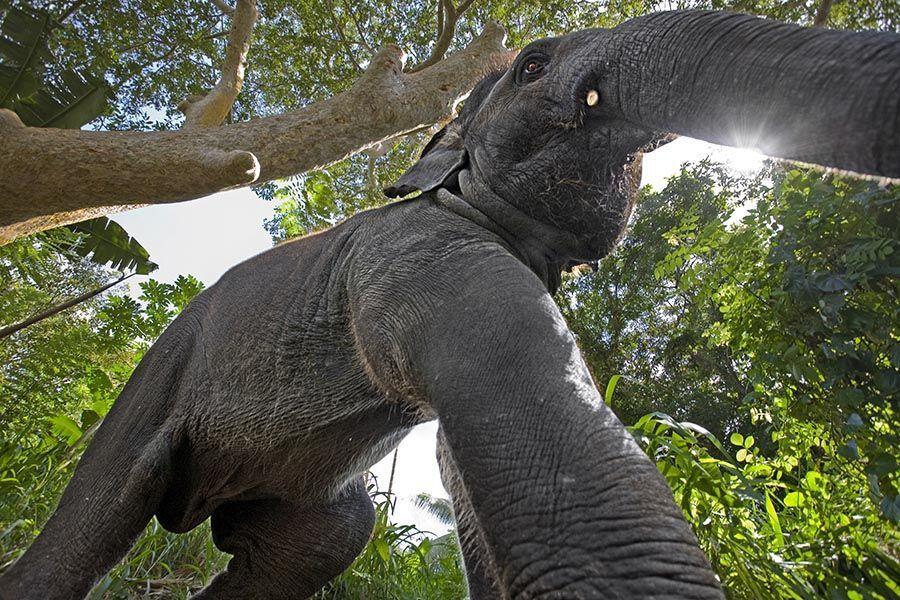 (Elefant fotografiert mit 17mm)