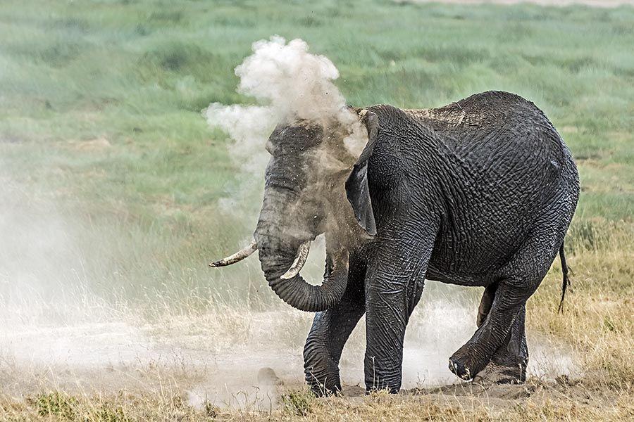 BJBenny-Rebel-Fotoreise-Tansania-Elefant