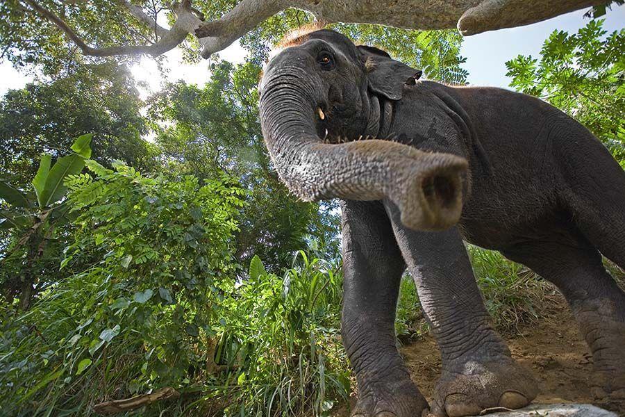 BKBenny-Rebel-FotoreiseSri-Lanka