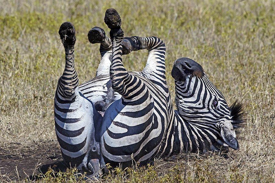 BMBenny-Rebel-Fotoreise-Tansania