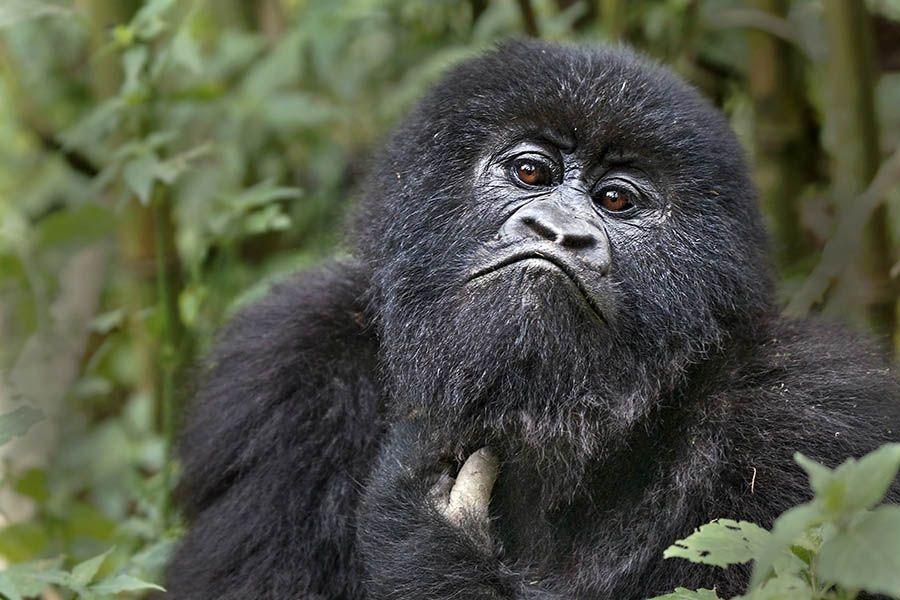 CMBenny-Rebel-Fotoreise-Ruanda