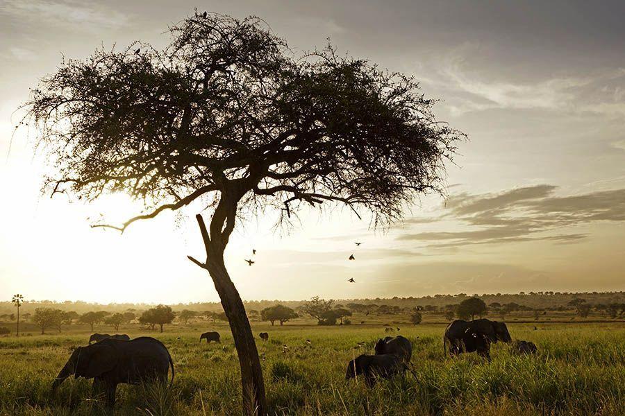 DMBenny-Rebel-Fotoreise-Tansania