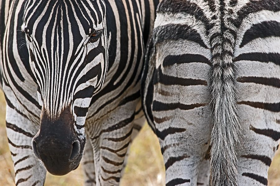DZBenny-Rebel-Fotoreise-Suedafrika