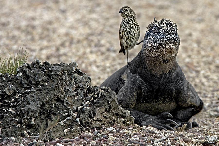 EGBBenny-Rebel-Fotoreise-Galapagos