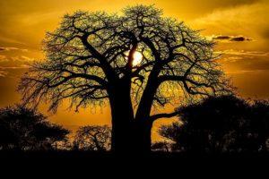 AA-Benny-Rebel-Fotoreise-Serengeti-Tansania