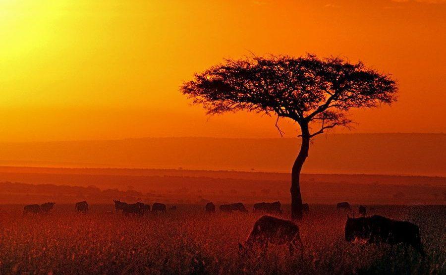 AACBenny-Rebel-Fotoreise-Kenia-220
