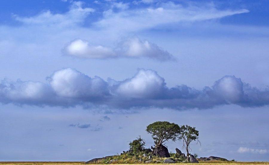 AAD-Benny-Rebel-Fotoreise-Serengeti-Tansania-188