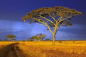 AADBenny-Rebel-Fotoworkshop-Tansania