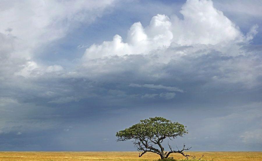 AAE-Benny-Rebel-Fotoreise-Serengeti-Tansania-181