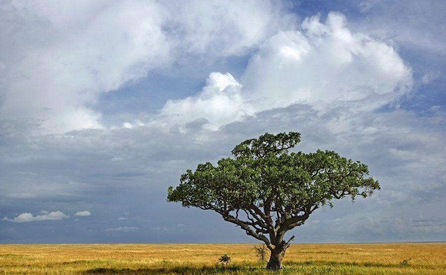 AAF-Benny-Rebel-Fotoreise-Tansania-182