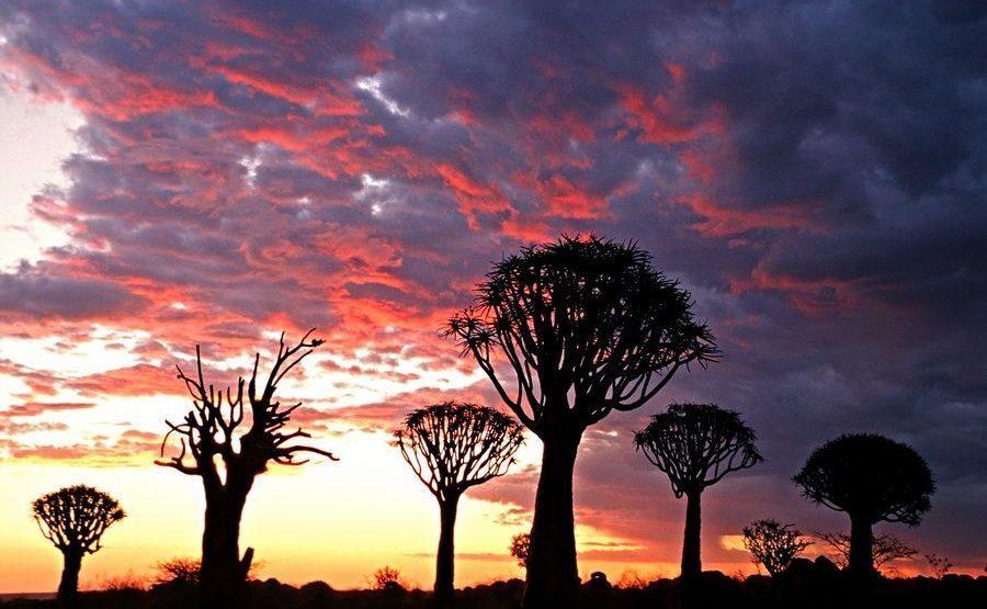 AAH-Benny-Rebel-Fotoreise-Koecherbaum-Namibia