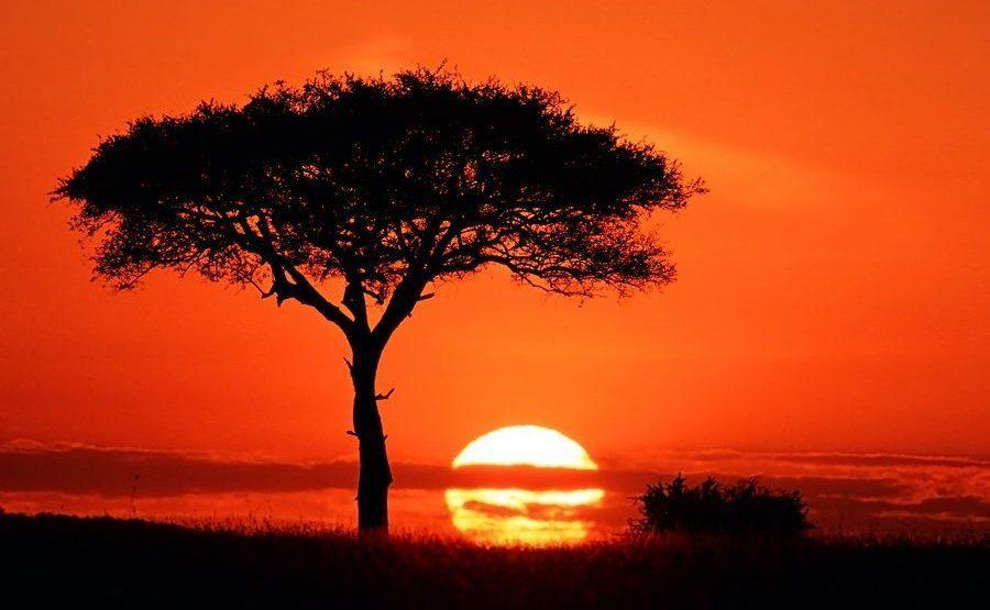 AAK-Benny-Rebel-Fotoreise-Kenia-Masai-Mara
