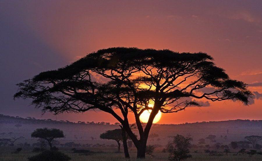 AAL-Benny-Rebel-Fotoreise-Serengeti-Tansania-189