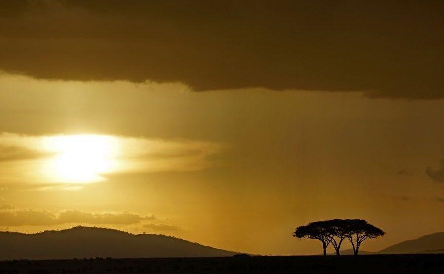 AAM-Benny-Rebel-Fotoreise-Serengeti-Tansania-187