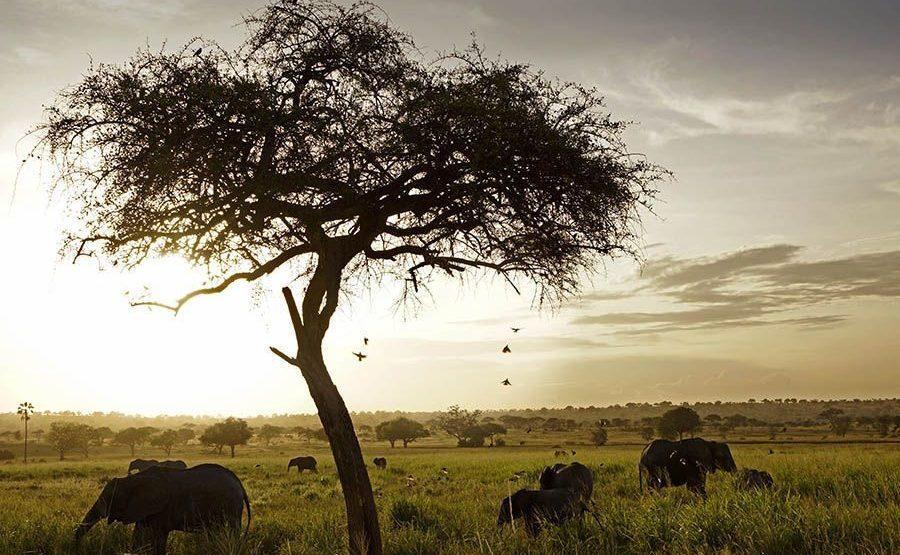 AANBenny-Rebel-Fotoreise-Tansania