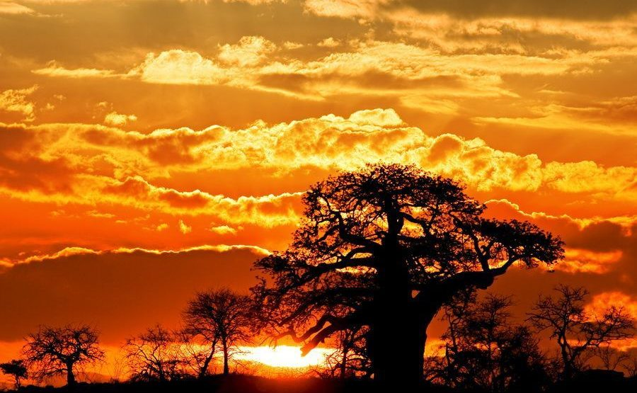 ABB-Benny-Rebel-Fotoreise-Affenbrotbaum-Suedafrika218