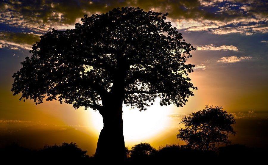 ABB-Benny-Rebel-Fotoreise-Affenbrotbaum-Tansania