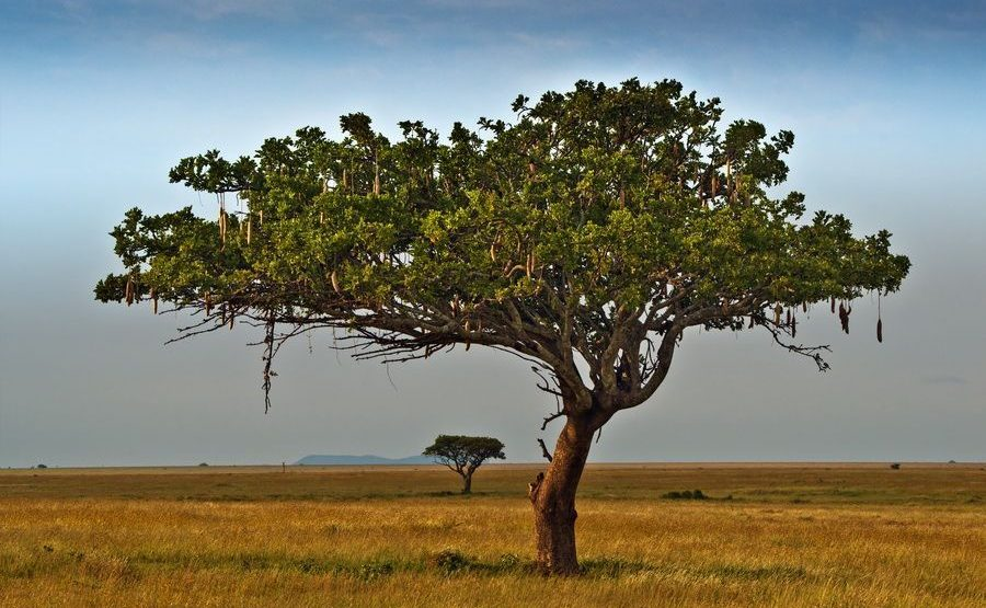 ABB-Benny-Rebel-Fotoreise-Serengeti-Tansania-208