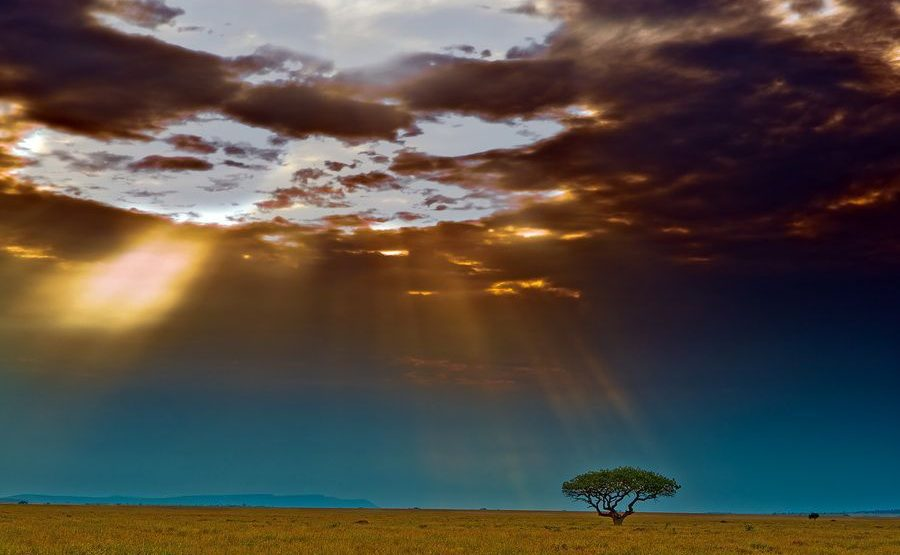 ABB-Benny-Rebel-Fotoreise-Serengeti-Tansania
