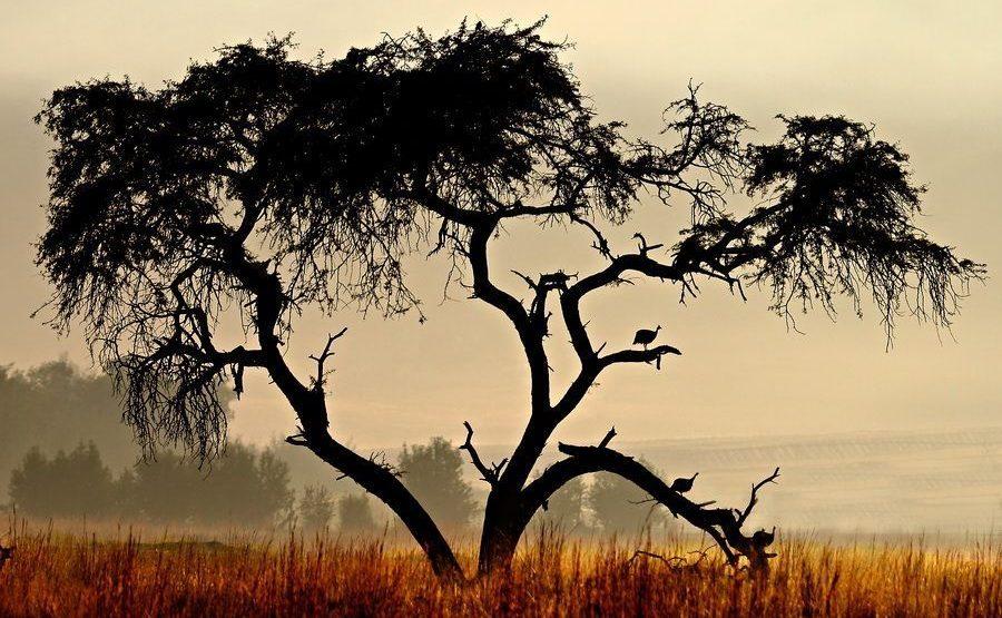 ABB-Benny-Rebel-Fotoreise-Suedafrika-