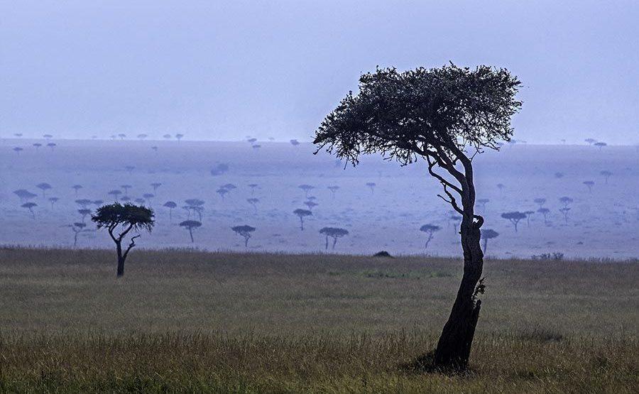 ABD-Benny-Rebel-Fotoreise-Maasai-Mara-Kenia