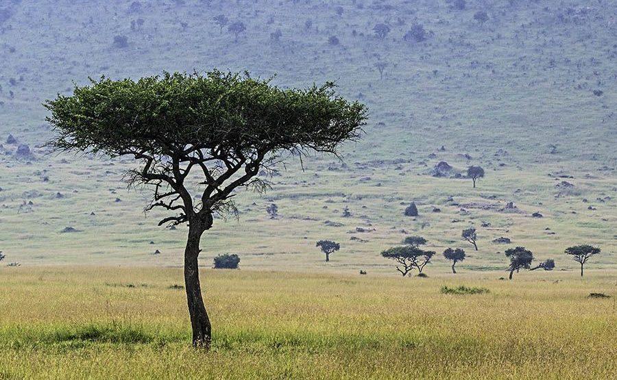 ABF-Benny-Rebel-Fotoreise-Maasai-Mara-Kenia