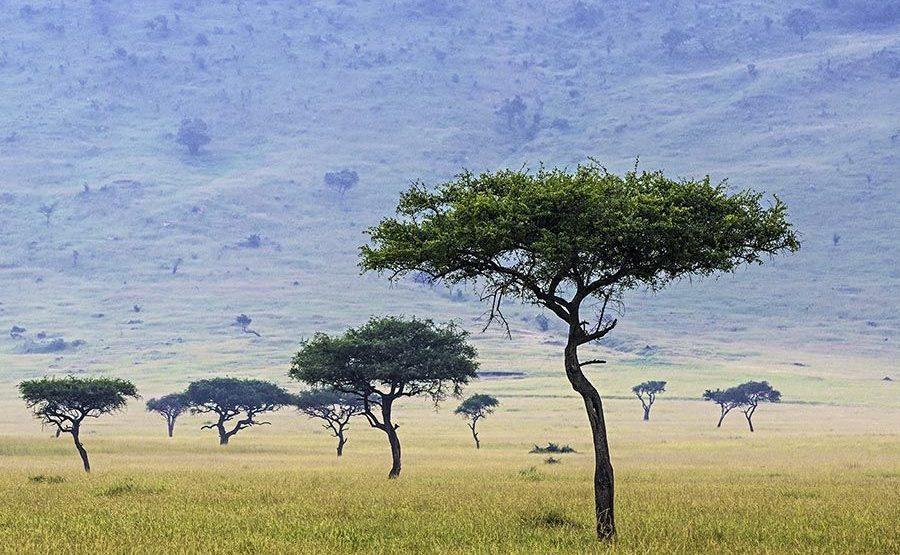 ABG-Benny-Rebel-Fotoreise-Maasai-Mara-Kenia