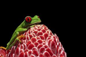 ABR-Benny-Rebel-Fotoreise-Frosch-Costa-Rica