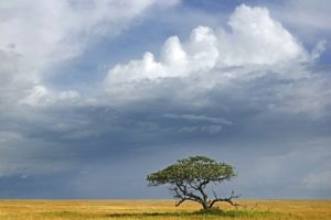 ABV-Benny-Rebel-Fotoreise-Serengeti-Tansania-181