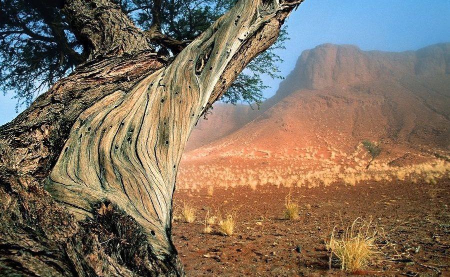 ACA-Benny-Rebel-Fotoreise-Namib-Wueste212
