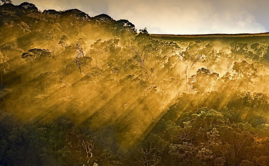 ACA-Benny-Rebel-Fotoreise-Serengeti-Tansania-207