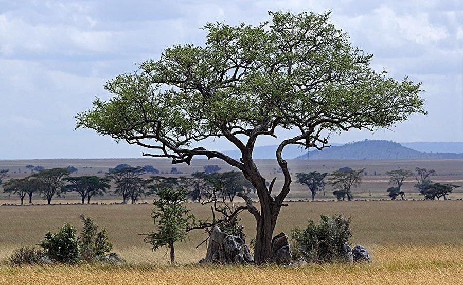 ACABenny-Rebel-Fotoreise-Tansania