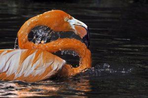 ACC-Benny-Rebel-Fotoreise-Flamingo
