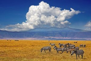 ACF-Benny-Rebel-Fotosafari-Tansania-Zebra