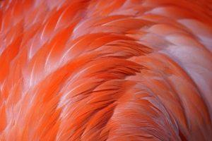ACX-Benny-Rebel-Fotoworkshop-Flamingo