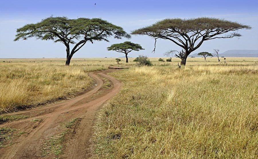 ADBenny-Rebel-Fotoreise-Tansania